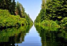 Widok panoramiczny na Kanał Augustowski,po lewej i prawej stronie widoczne krzewy i drzewa w kolorze soczystej zieleni Puszczy Augustowskiej, fot. J. Koniecko