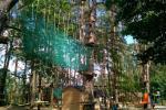 Park linowy Lemur