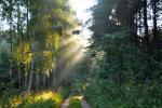 Leśna droga w Puszczy Augustowskiej,na którą pdadają promienie słońca, przebijające się przez konary drzew, fot. J. Koniecko