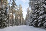 Puszcza Augustowska zimą, fot. J. Koniecko